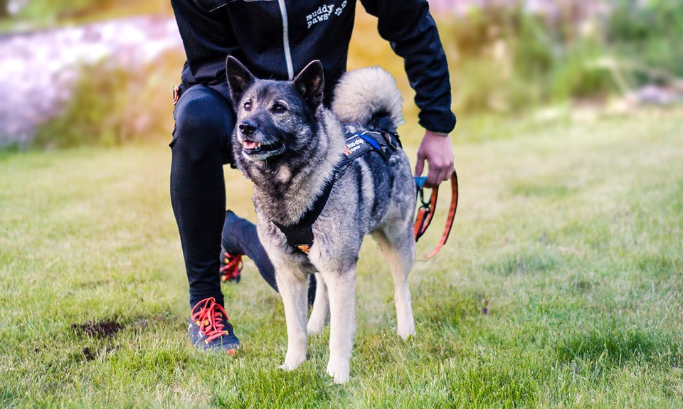 racedog1
